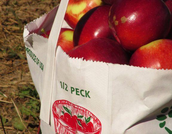 avantaje pungi biodegradabile